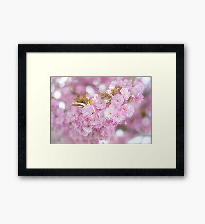 Kwanzan Cherry Branch Framed Print