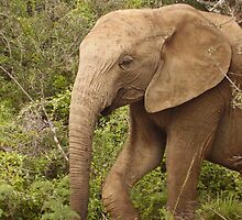 Elephant in the Bushes by HelenBanham