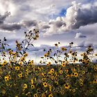 Wild Sunflowers by Kathy Weaver