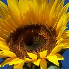 Face Toward the Sun by kalliope94041