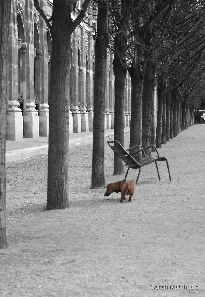 Row of Trees, Paris by Sarah Matthews