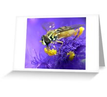 Purple Playground (Re-Issued) Greeting Card