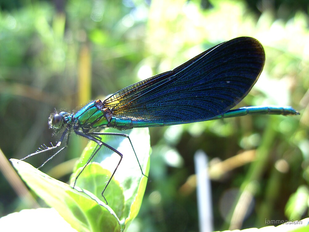 Green Dragonfly by iammeasiam