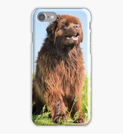 newfoundland brown sitting iPhone Case/Skin