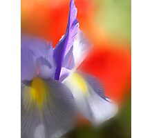Iris in the Abstract Photographic Print
