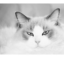 Kitty in Black and White Photographic Print
