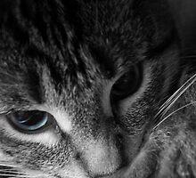 Blue Eye by Bree Tipton