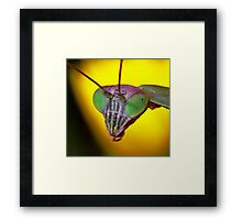Praying Mantis (2) Framed Print