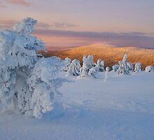 Lapland Mornings by Bartt