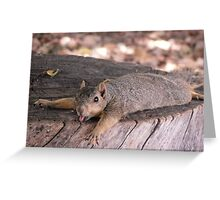 Heat Stroke Squirrel Greeting Card