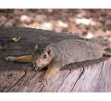 Heat Stroke Squirrel Photographic Print