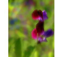 Softly Sweetpeas Photographic Print