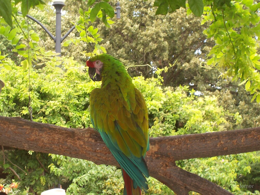 pretty bird by lemer
