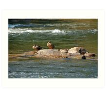 Hanging Out on the Rocks with the Guys Art Print
