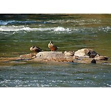 Hanging Out on the Rocks with the Guys Photographic Print