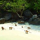Monkey Beach by Margaret Stevens