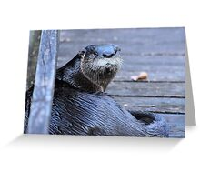 North American River Otter ( Lontra,canadensis) Greeting Card