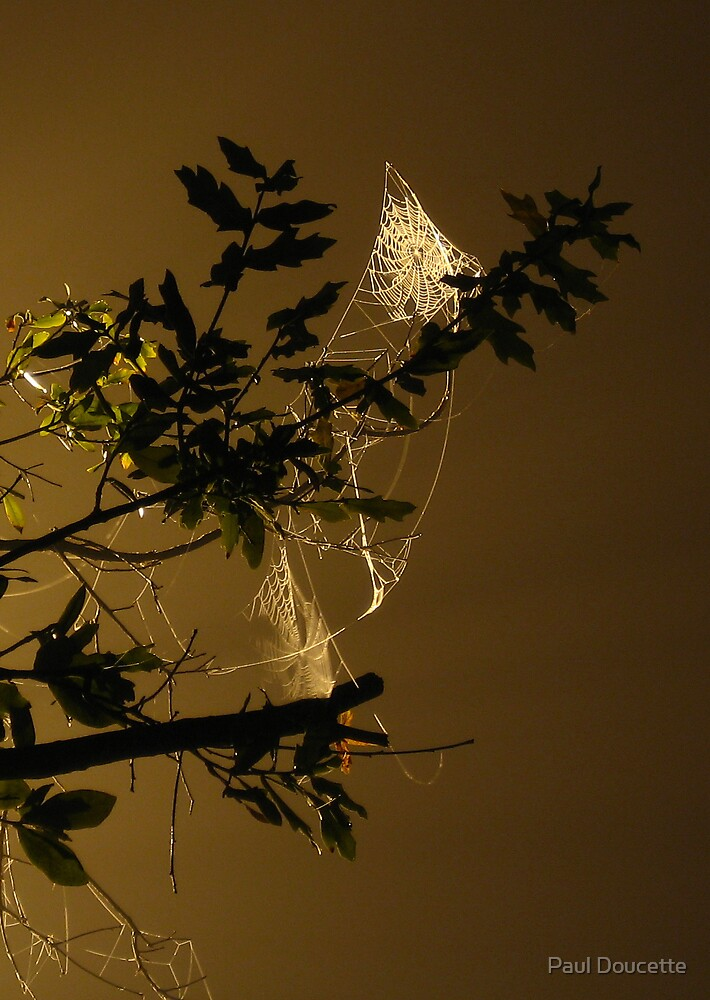 """Spider web in the spotlight"" by Paul Doucette"