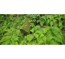 Log and Ferns Photographic Print