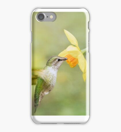 anna's hummer and daffodil  iPhone Case/Skin