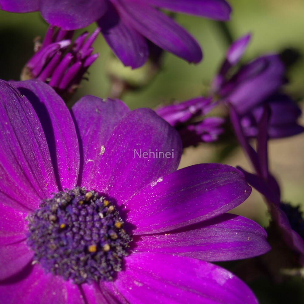 Purple Flower by Nehinei
