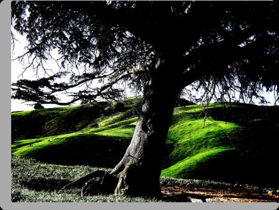 A Living Landmark - The Cedar Of Lebanon by Michael Kienhuis