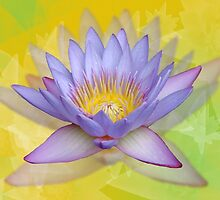 Crazy about lotus by Caryn Colgan