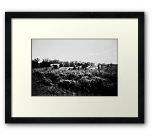 Wisconsin Cows Framed Print