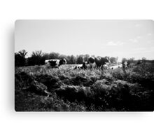 Wisconsin Cows Canvas Print