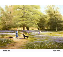 Bluebell Girls Photographic Print