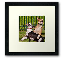 Dogs with game face on .3 Framed Print