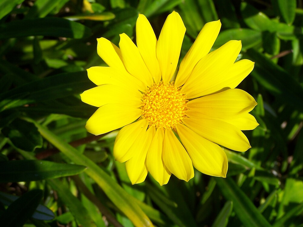Sunshine by Princessbren2006