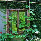 Old Kitchen Window by Cynthia48