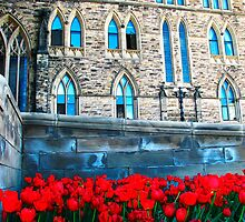 Red Blossoms  to Parliment Hill by Kelly  McAleer