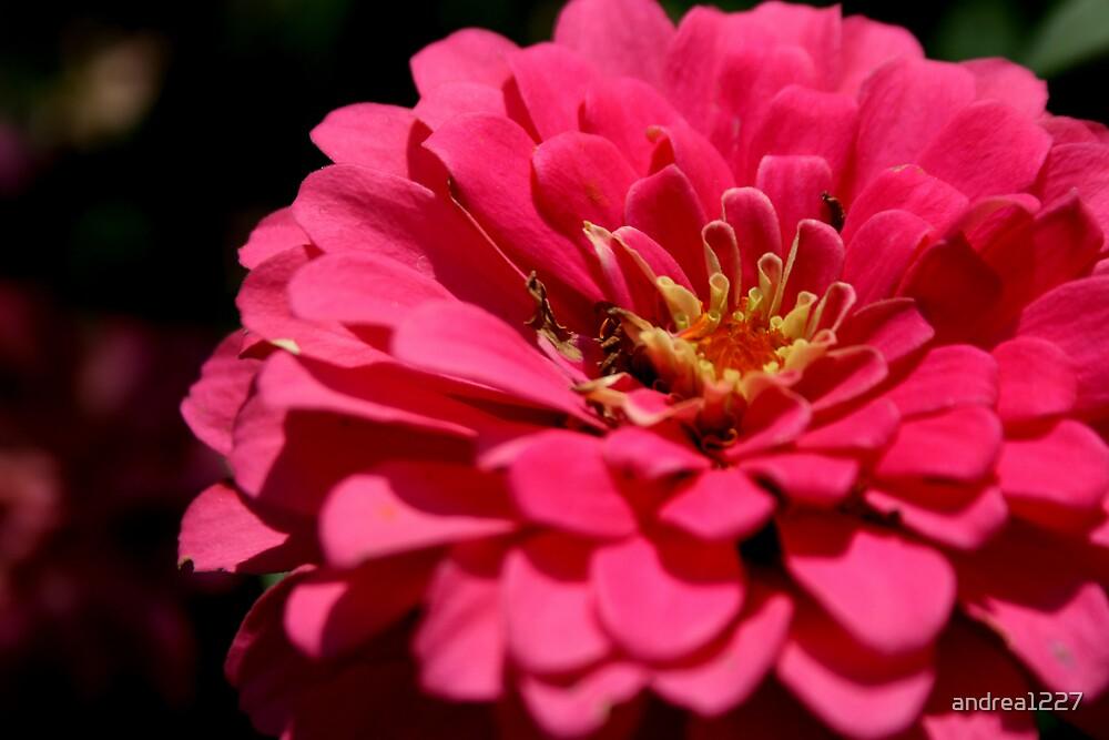 Pink Petals by andrea1227