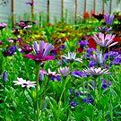 Garden Flowers by Randall Robinson