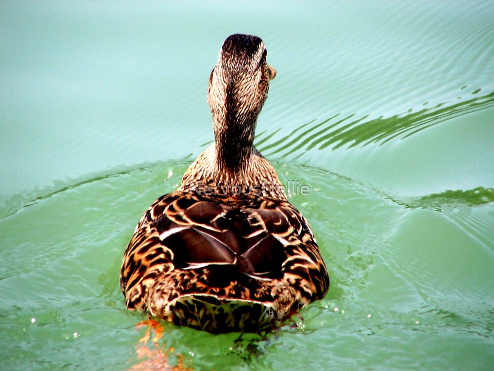 Duck Back by NervousNellie