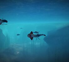 Jelly Fish by jspada
