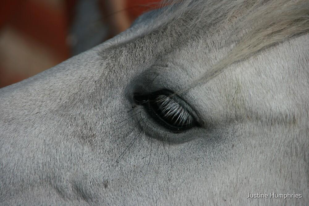 Eye eye by Justine Humphries