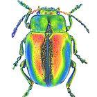 Christmas Beetle by stephdrawsstuff
