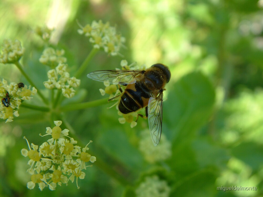 Bee by migueldelmonte