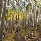 Autumn Hike - Lockett Meadow by Candy Gemmill