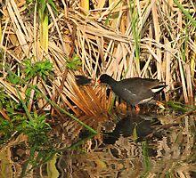 Life on the pond by danita