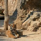 Tiger, Tiger Temple Thailand by Lenarick