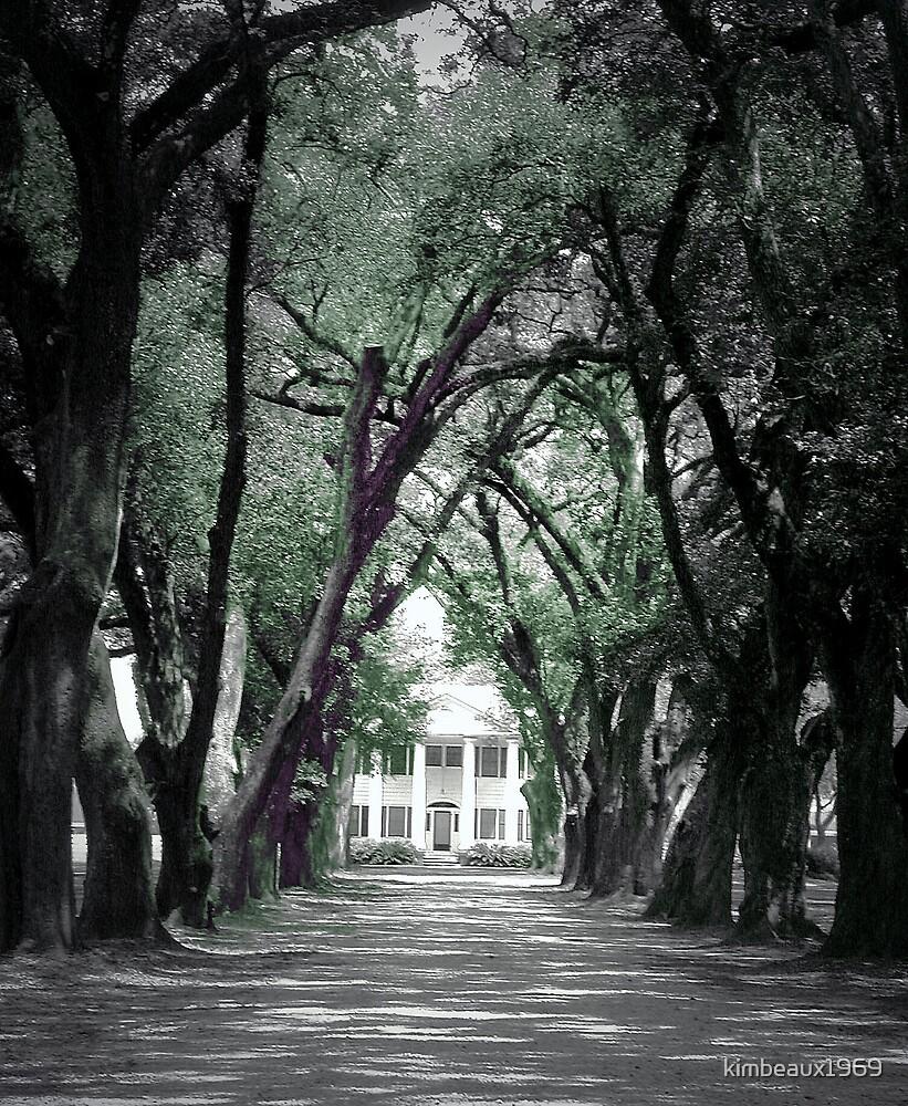 Majestic Oak Trees,  by kimbeaux1969