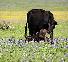 Newborn Calf by EmmaLeigh