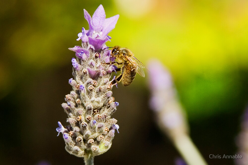 Working Bee by Chris Annable