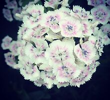 White Hydrangeas by Lagoldberg28