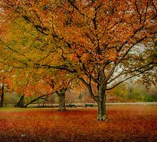 Newengland Colorful November. by LudaNayvelt