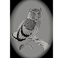 The Chubby Owl Photographic Print
